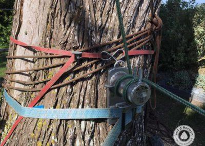 Taille d'éclaircie sur cyprès à Quimiac