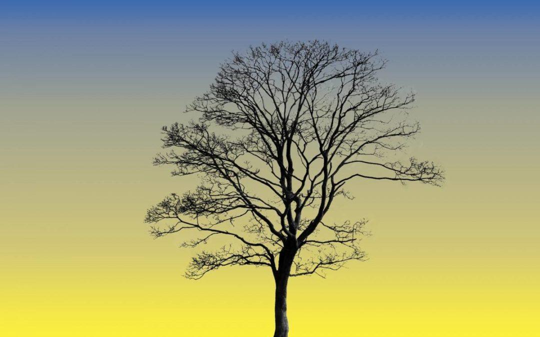 Le stress hydrique de l'arbre