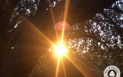 L'arbre et la lumière