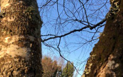 Écorce et coup de soleil de l'arbre