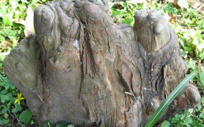 L'arbre amphibie