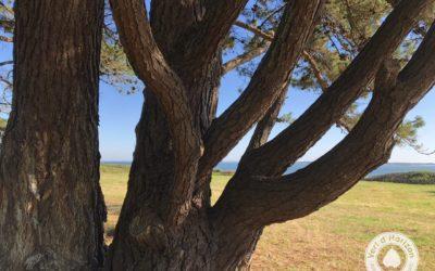 la couronne de l'arbre