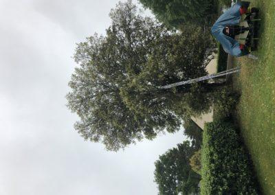 taille d'éclaircie chêne vert la turballe