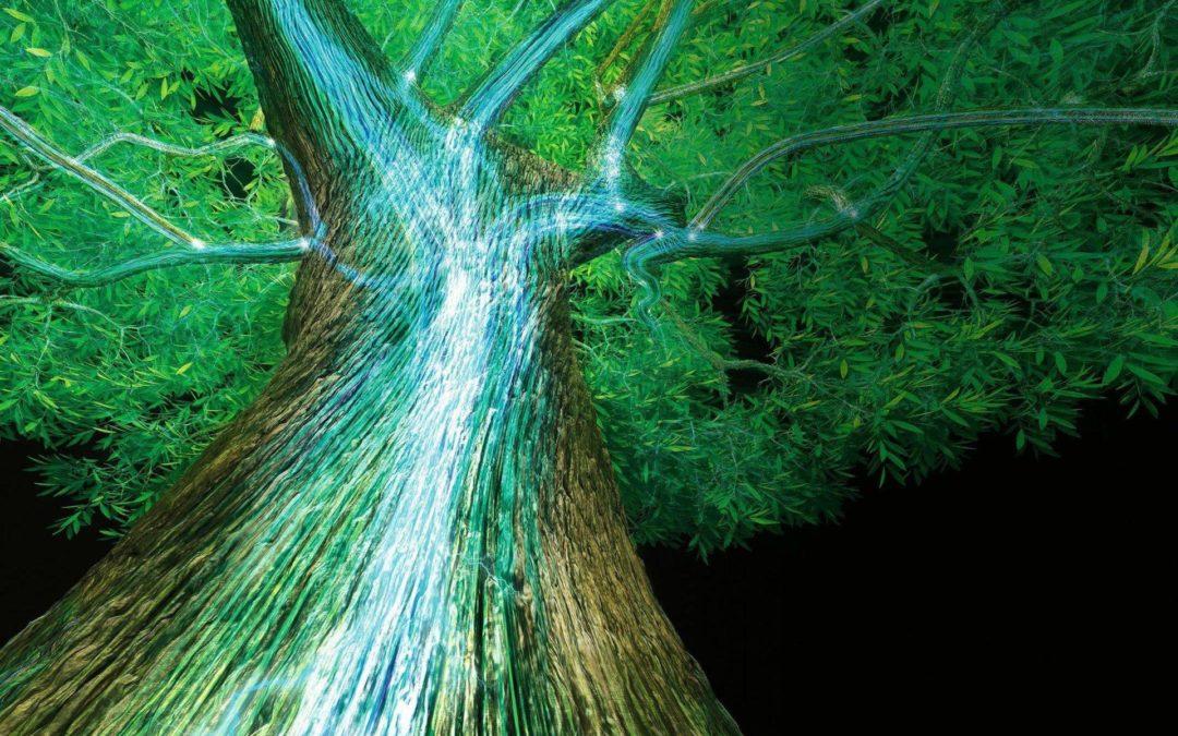 L'intelligence de l'arbre